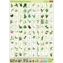 Plant-Poster Cut greenery