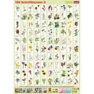 Pflanzen-Poster Schnittblumen II