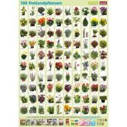 Pflanzen-Poster Freilandpflanzen