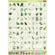 Planzen-Poster Schnittgrünarten