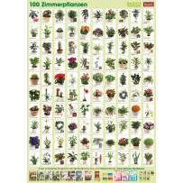 Pflanzen-Poster Zimmerpflanzen