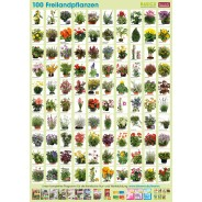 Plant-Poster Outdoor Plants