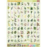 Plant-Poster Cut wood