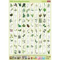 Plant-Poster Cut greenery